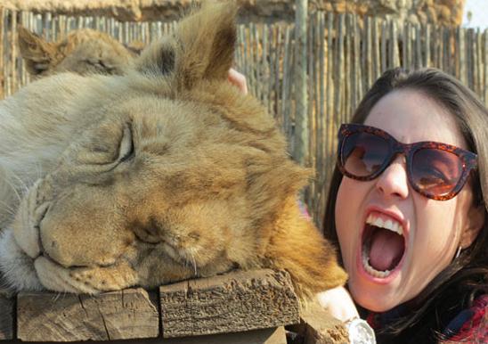 coisas que amamos lions park