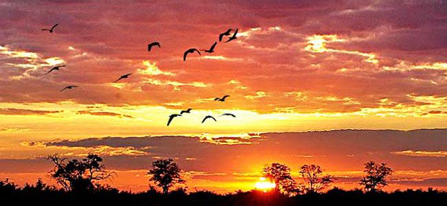 coisas que amamos viagem dos sonhos botswana