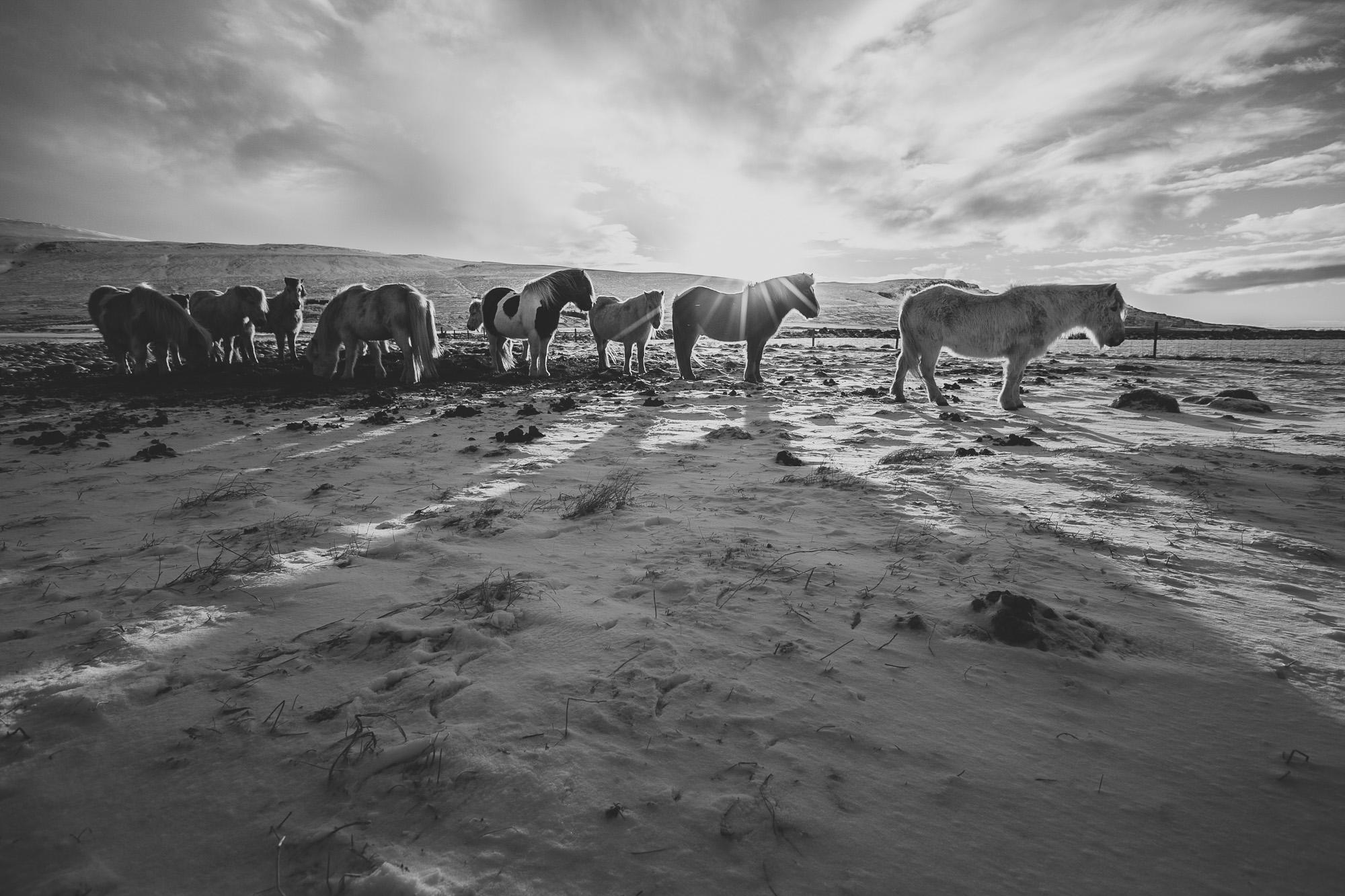 fotos em preto e branco camilla cheade